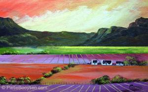 Lavender fields by Pietie Booysen