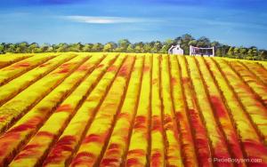 Potato field by Pietie Booysen